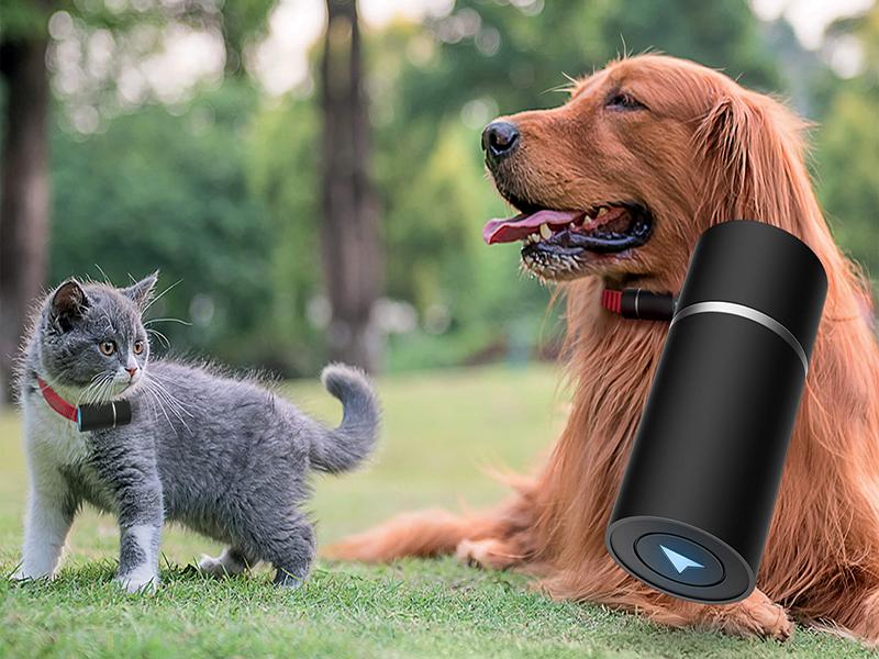 نگهداری حیوانات خانگی با اینترنت اشیاء