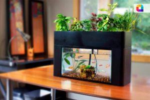 Smart Aquaplant