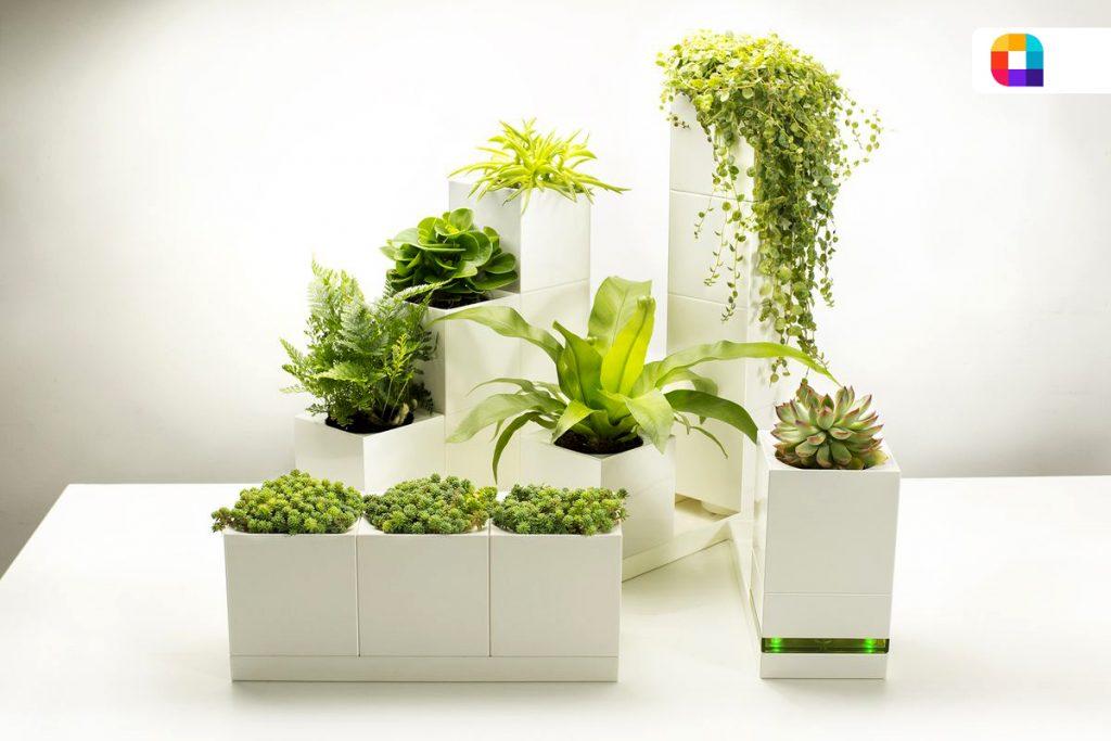 گلدان هوشمند برای گیاهان آپارتمانی