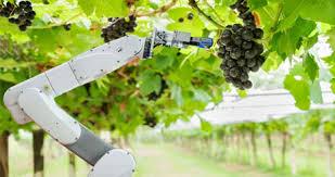 هوش مصنوعی و کشاورزی