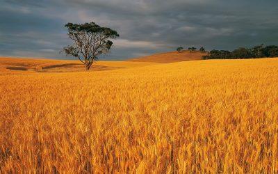 راهکارهای هوشمندسازی کشاورزی